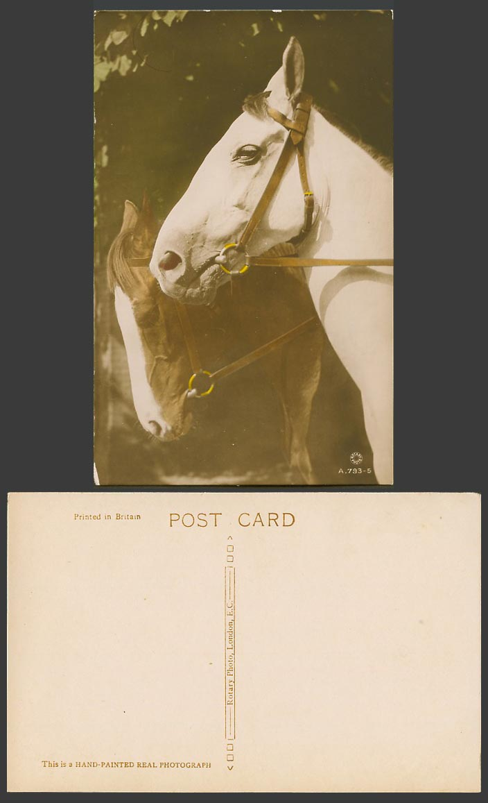 Horse Pony Horses Ponies Animals Old Postcard Hand Painted Photogr, Rotary Photo